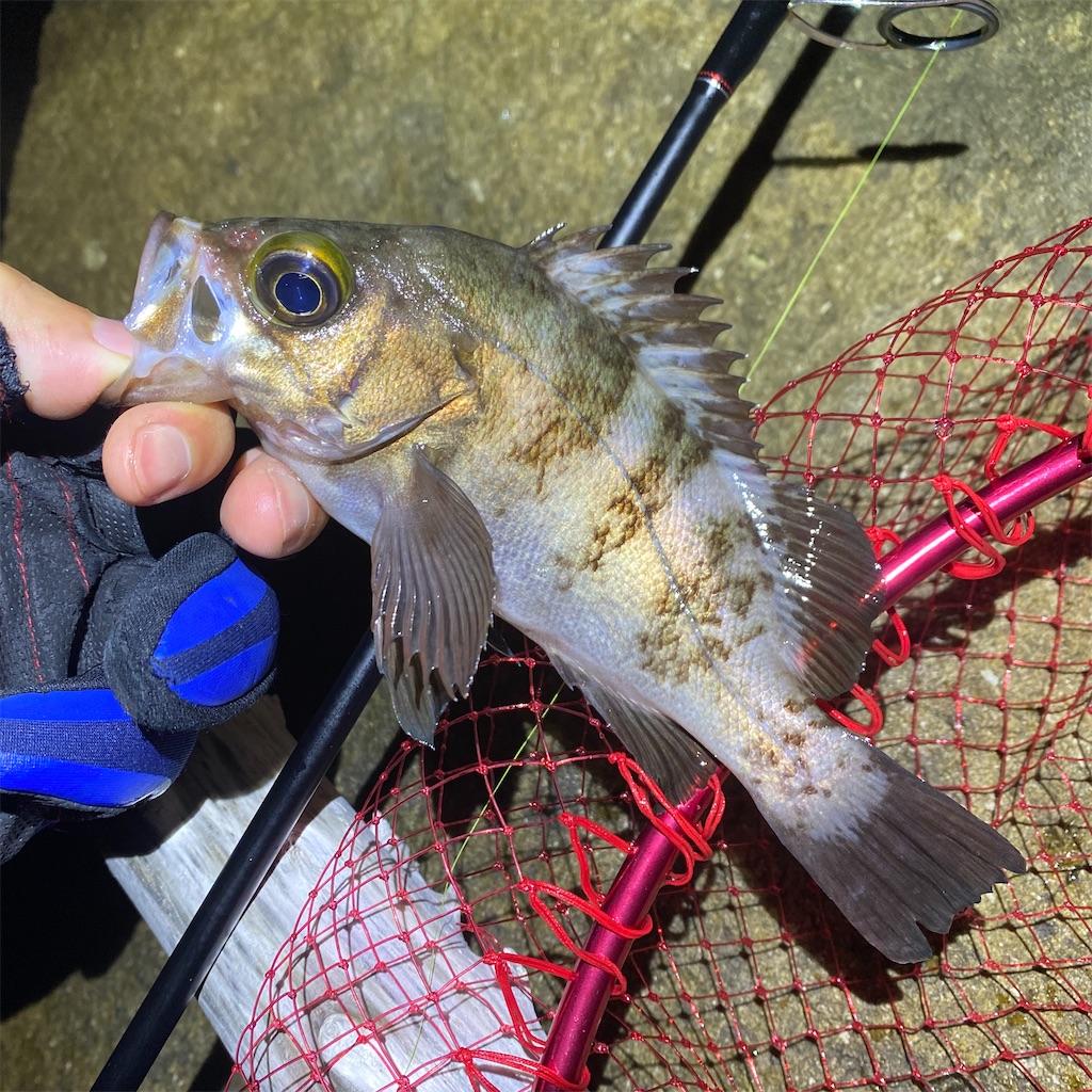 f:id:yu-kin-fishing:20200628093007j:image