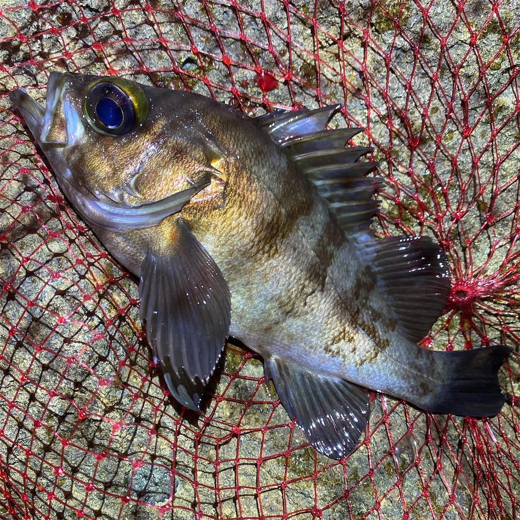 f:id:yu-kin-fishing:20200628093014j:image