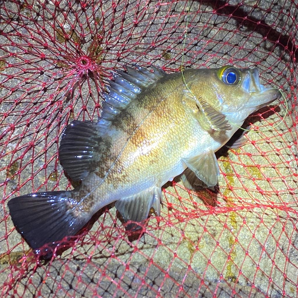 f:id:yu-kin-fishing:20200628093026j:image