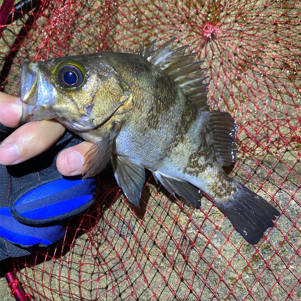 f:id:yu-kin-fishing:20200628093125j:image