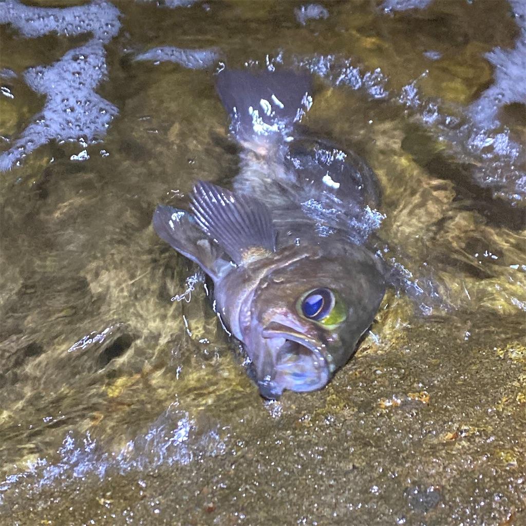 f:id:yu-kin-fishing:20200628234019j:image