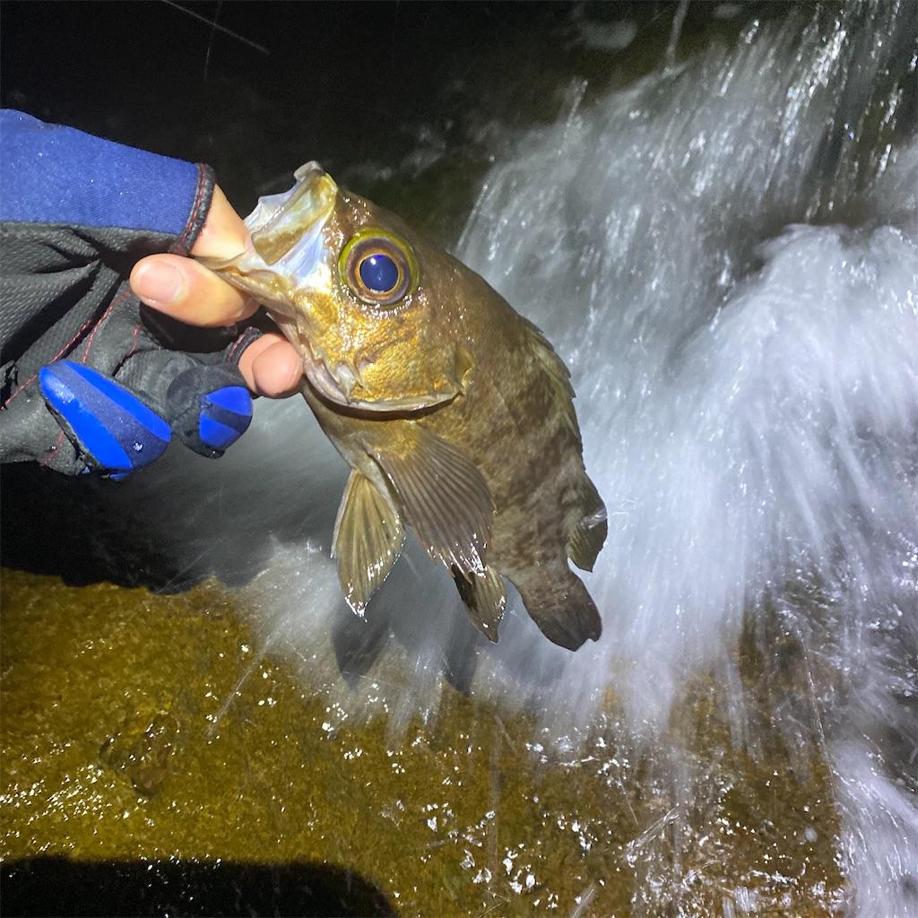 f:id:yu-kin-fishing:20200629231453j:image