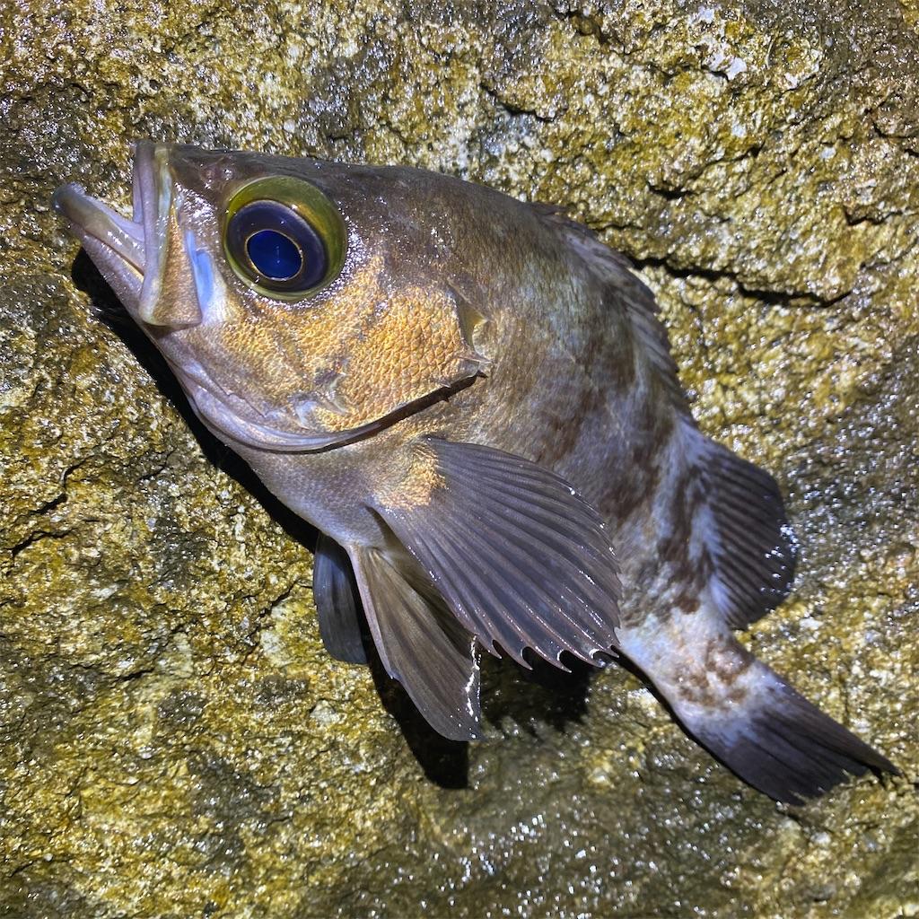 f:id:yu-kin-fishing:20200705002709j:image