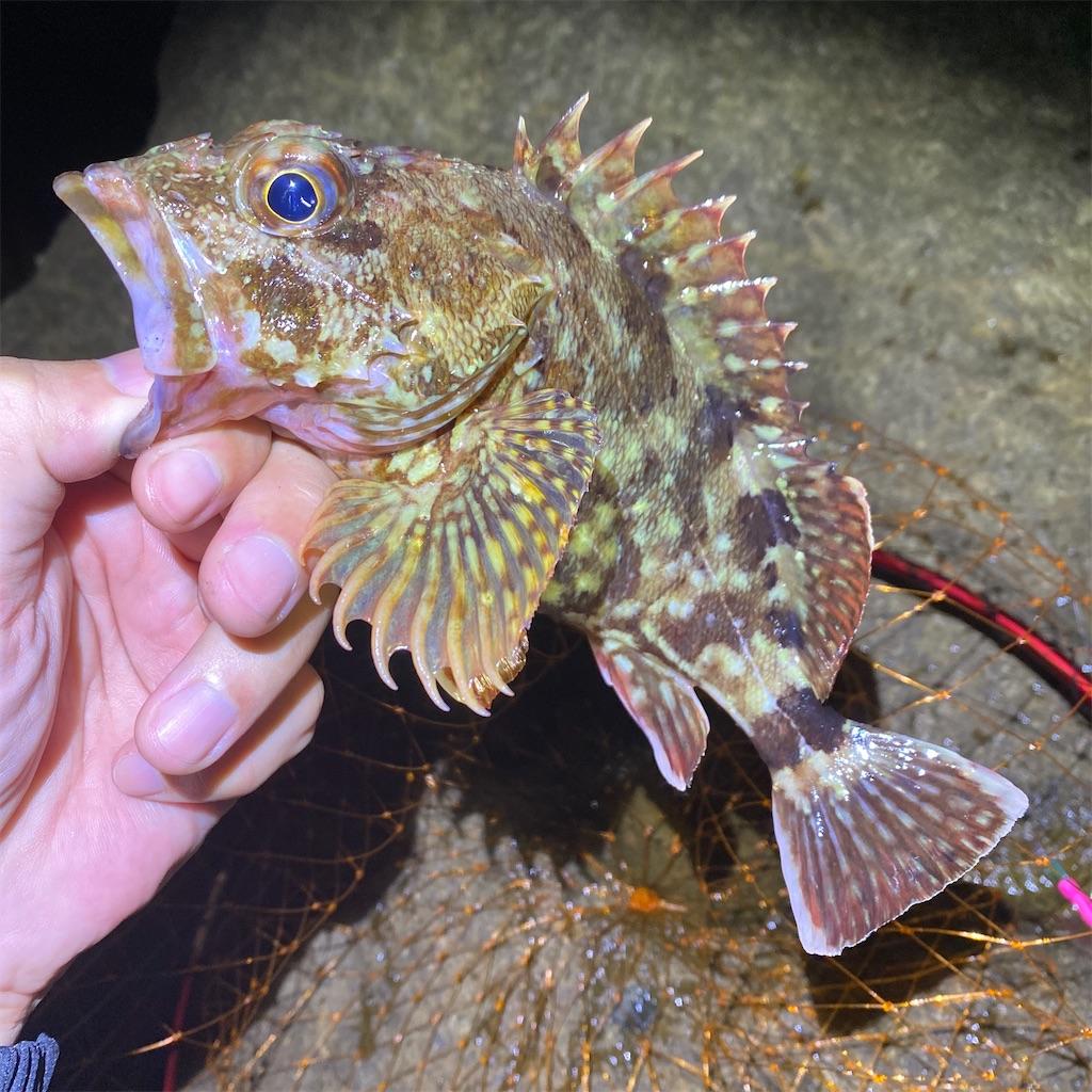 f:id:yu-kin-fishing:20200709230126j:image