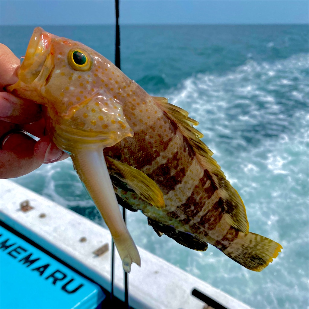 f:id:yu-kin-fishing:20200801190026j:image