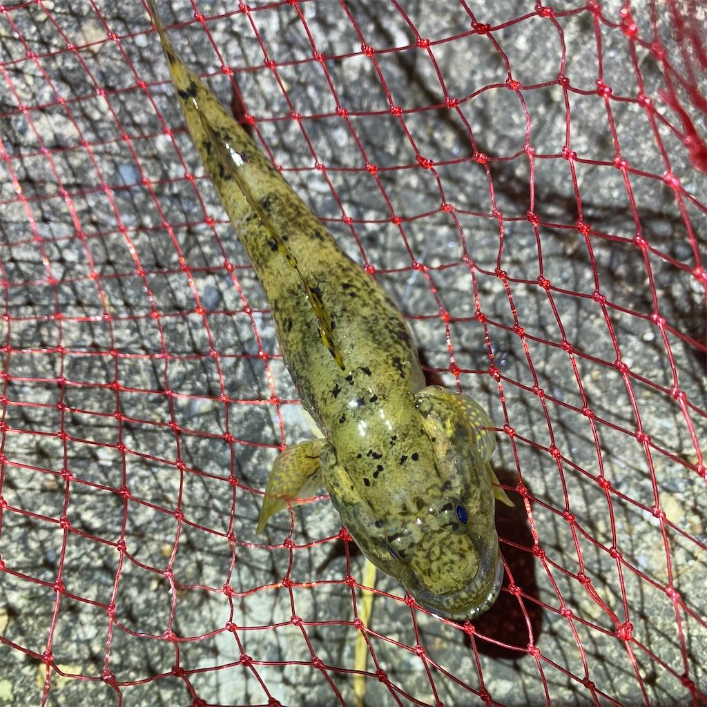f:id:yu-kin-fishing:20200810231113j:image