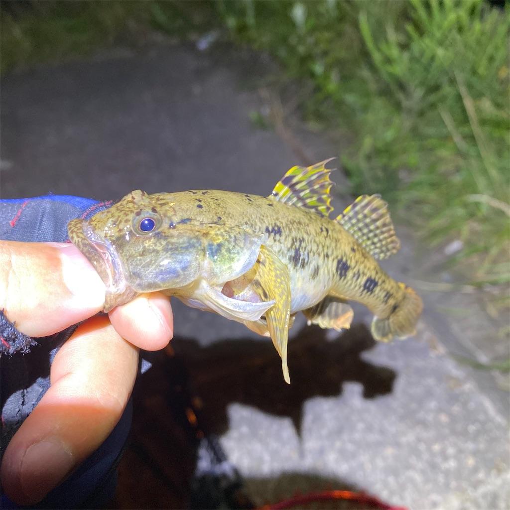 f:id:yu-kin-fishing:20200810231131j:image