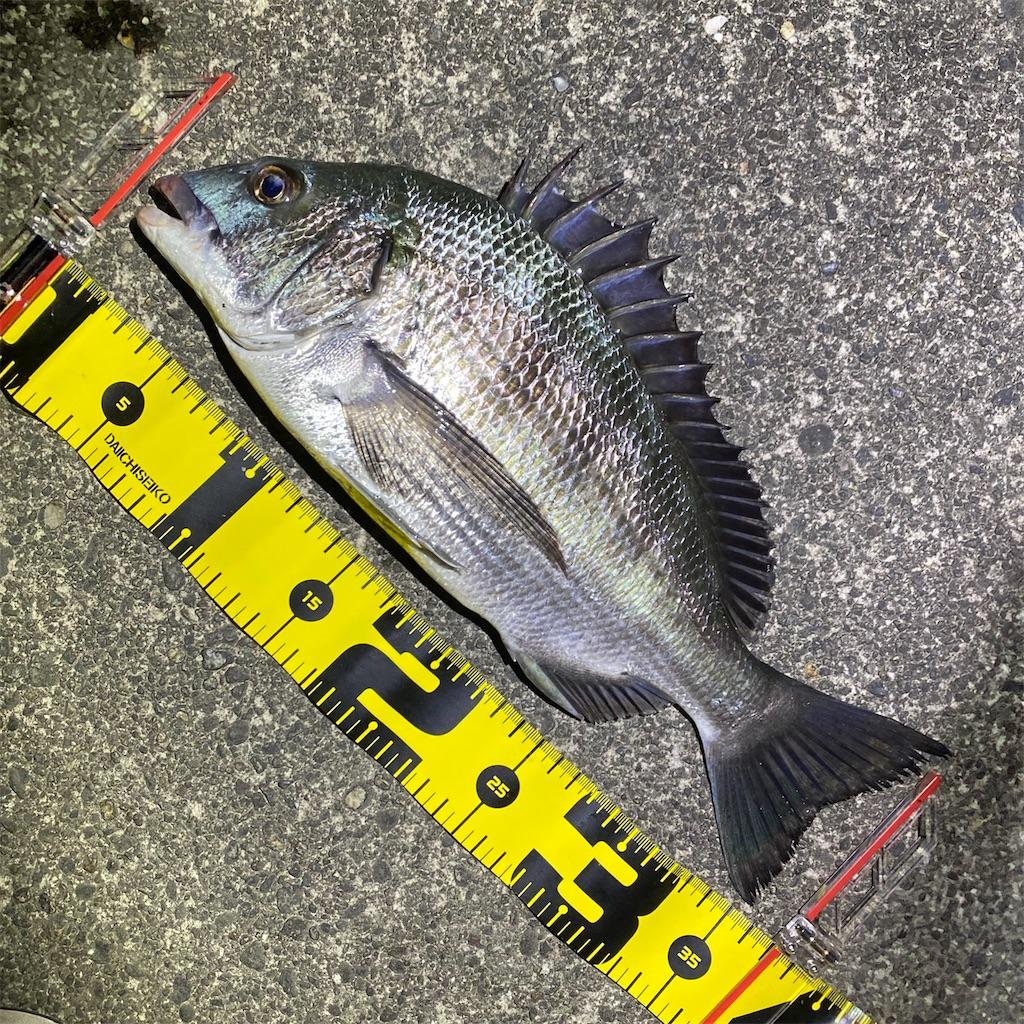 f:id:yu-kin-fishing:20200810231835j:plain