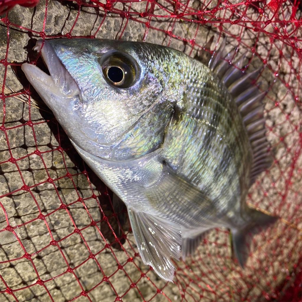 f:id:yu-kin-fishing:20200816100352j:image