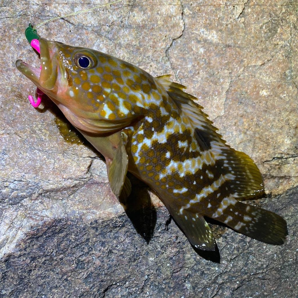 f:id:yu-kin-fishing:20200819101038j:image