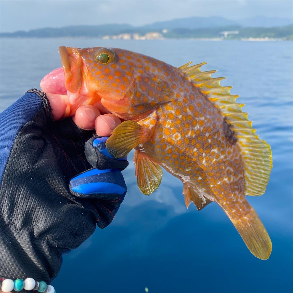 f:id:yu-kin-fishing:20200822205329j:image
