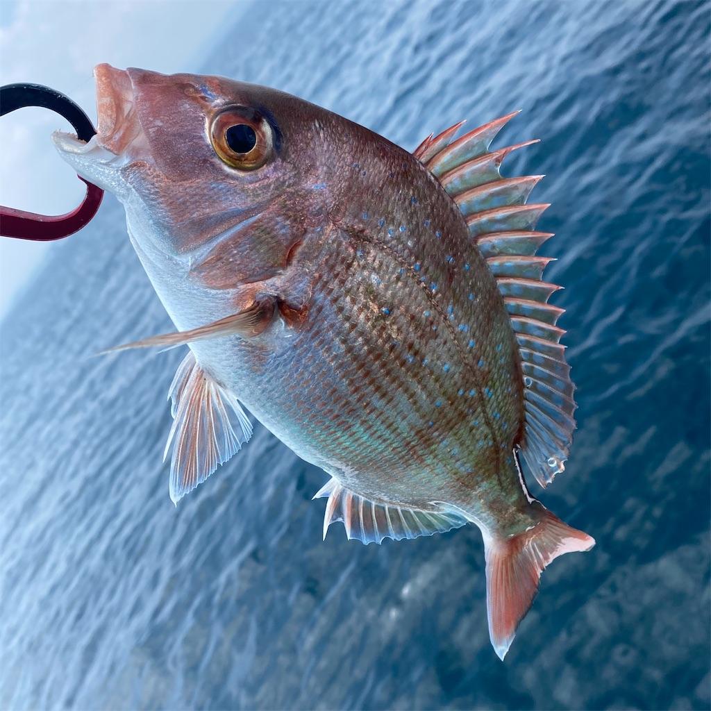 f:id:yu-kin-fishing:20200822205332j:image