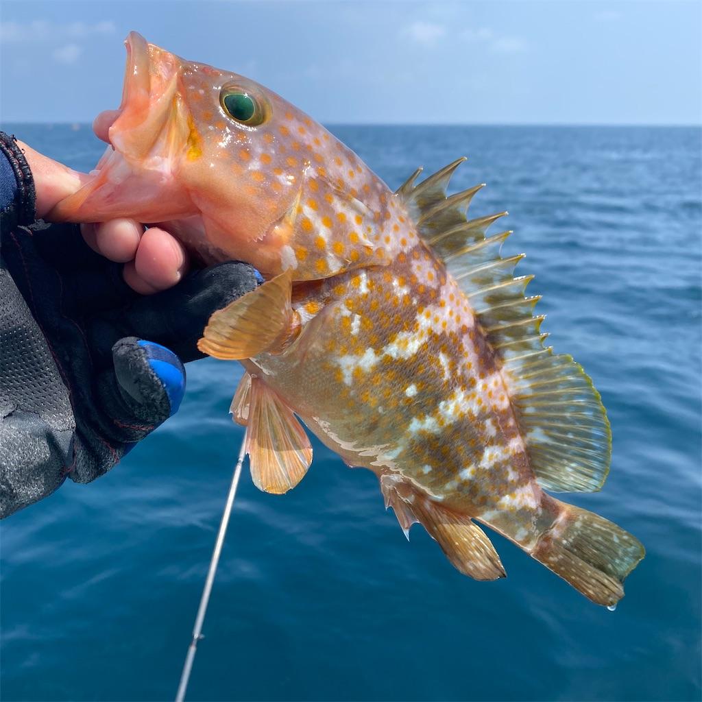f:id:yu-kin-fishing:20200822205342j:image