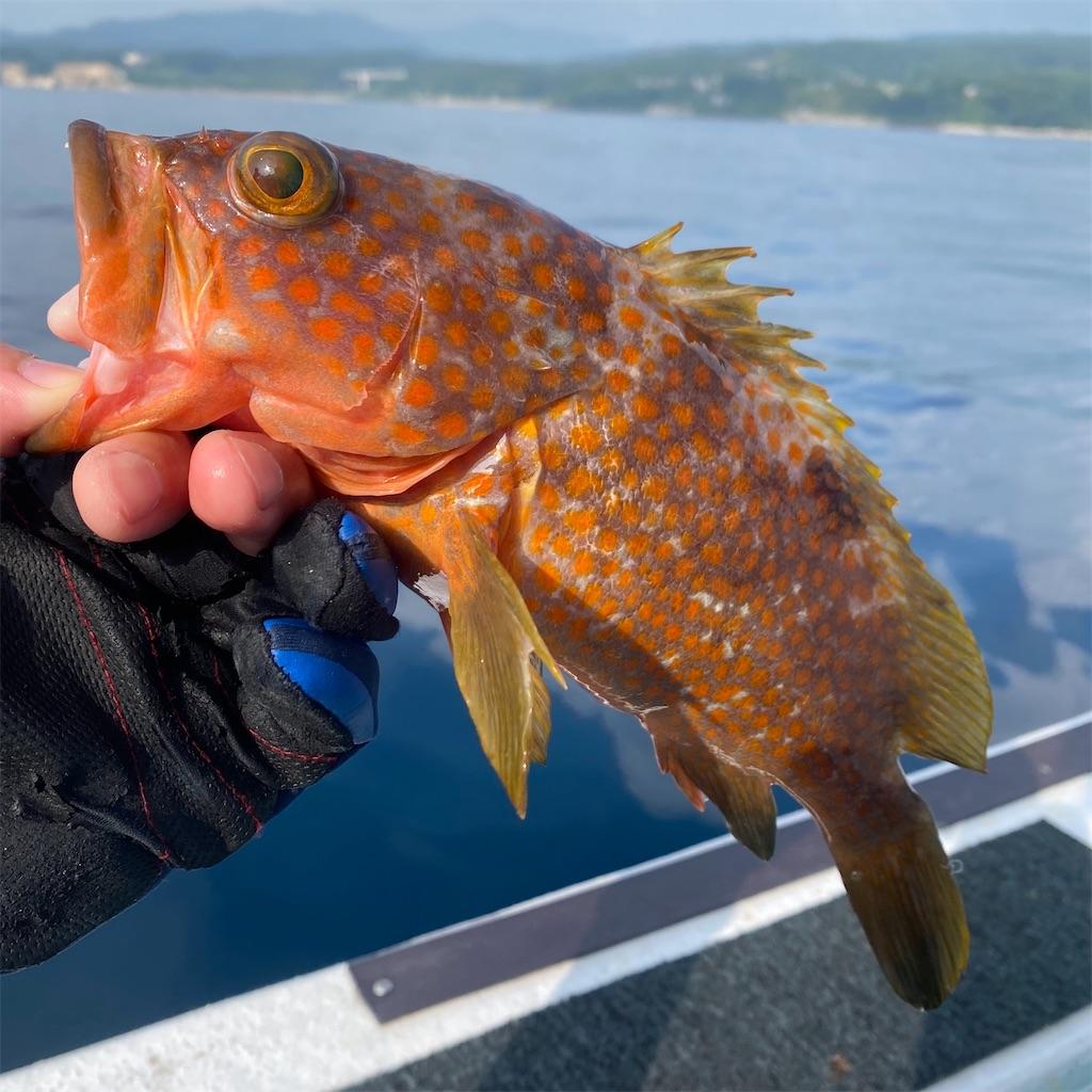 f:id:yu-kin-fishing:20200822205345j:image