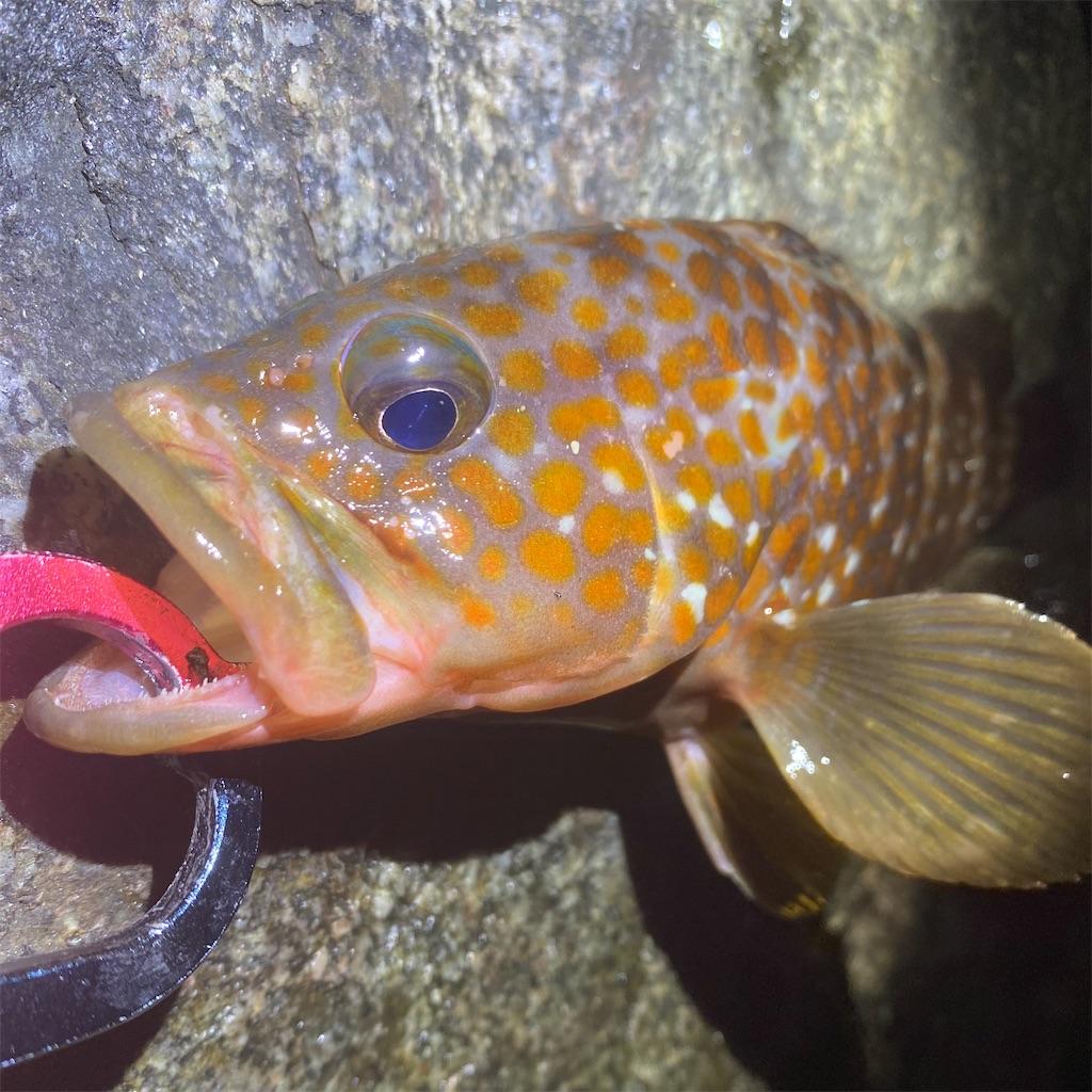 f:id:yu-kin-fishing:20200827233252j:image