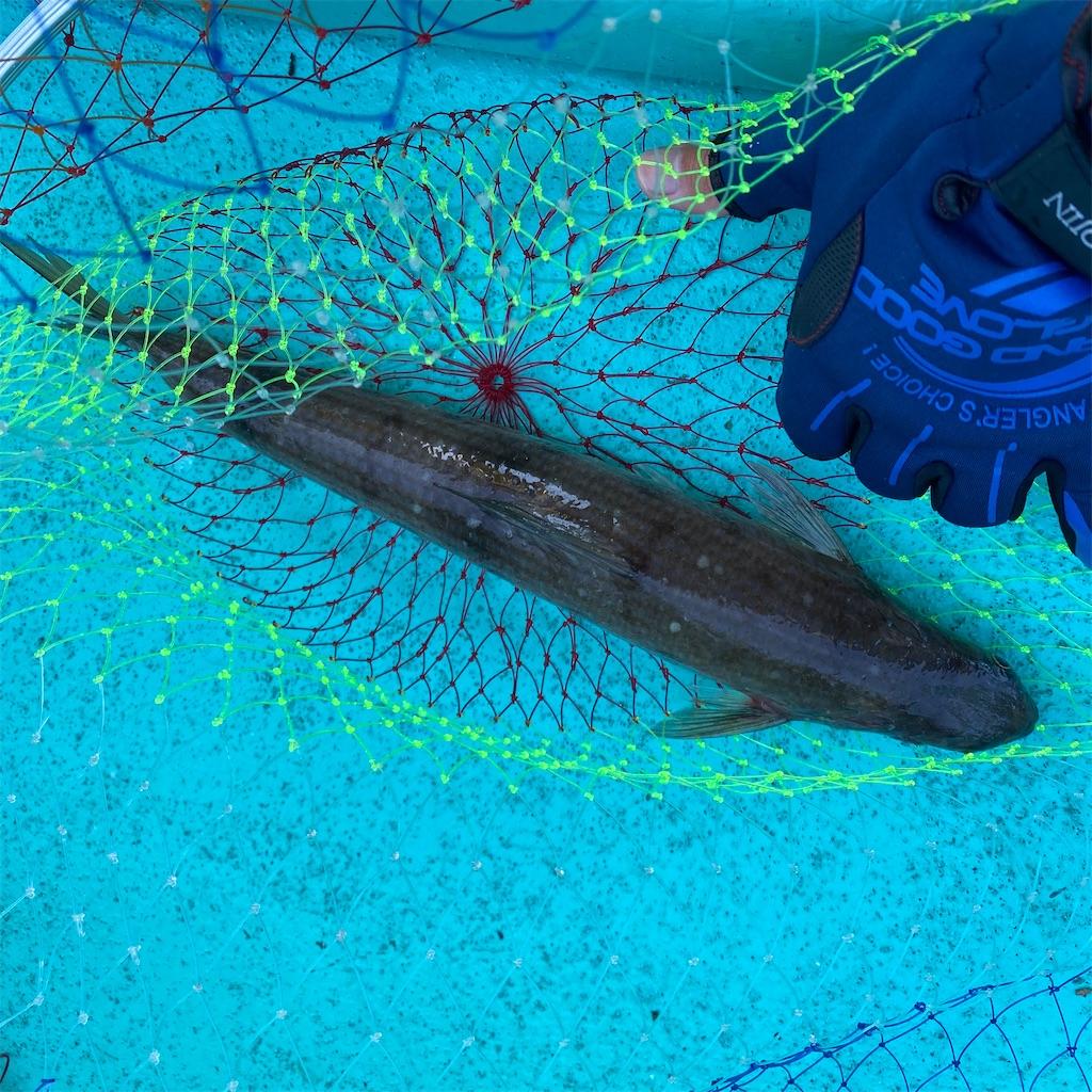 f:id:yu-kin-fishing:20200830192120j:image