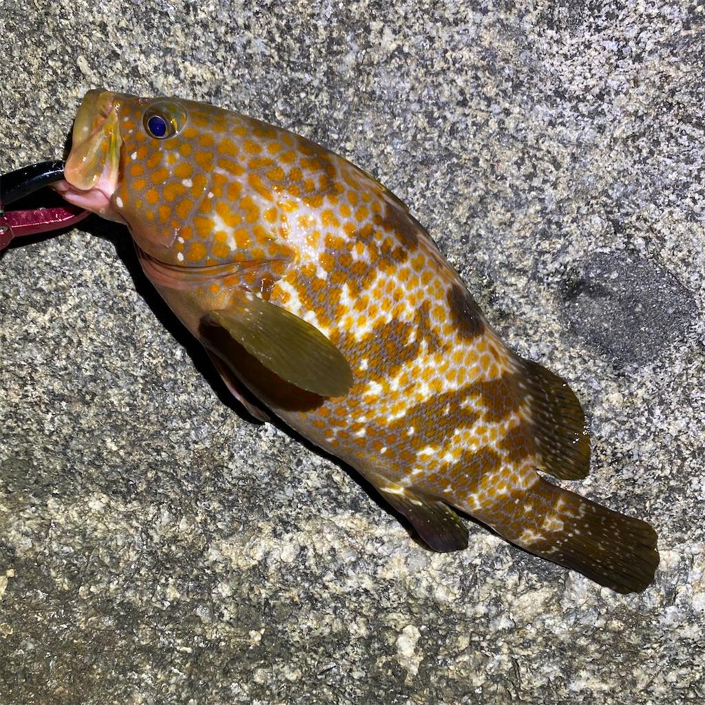 f:id:yu-kin-fishing:20200903234354j:image