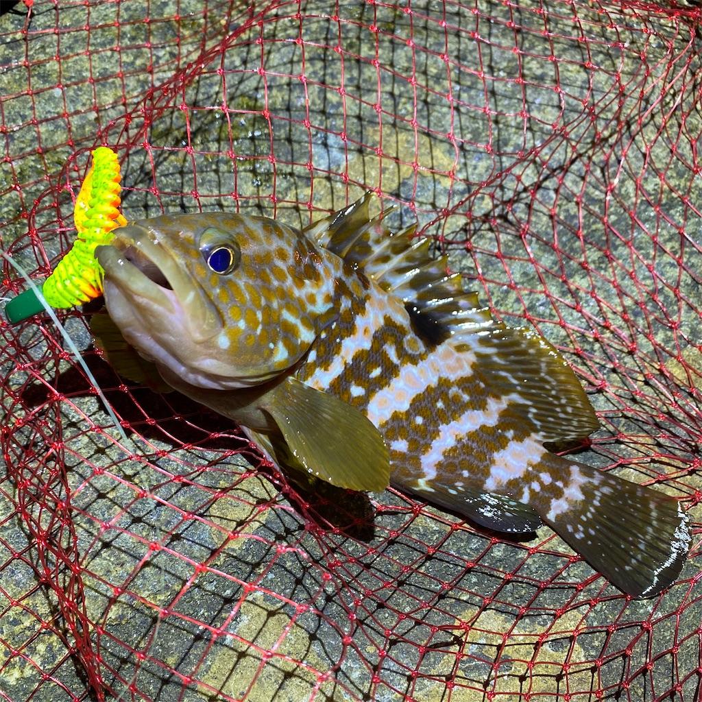 f:id:yu-kin-fishing:20200903234805j:image