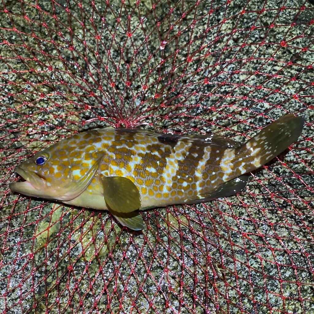 f:id:yu-kin-fishing:20200903234903j:image