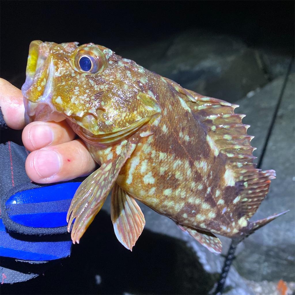 f:id:yu-kin-fishing:20200903235328j:image