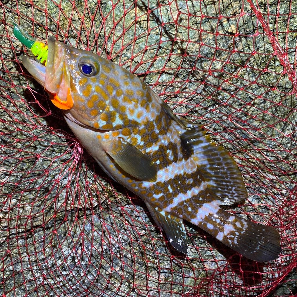 f:id:yu-kin-fishing:20200903235531j:image