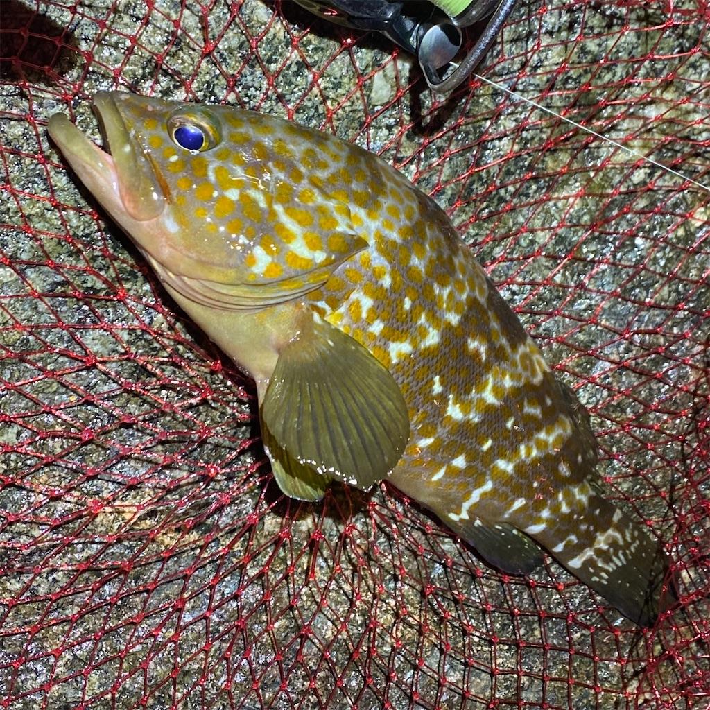 f:id:yu-kin-fishing:20200903235726j:image