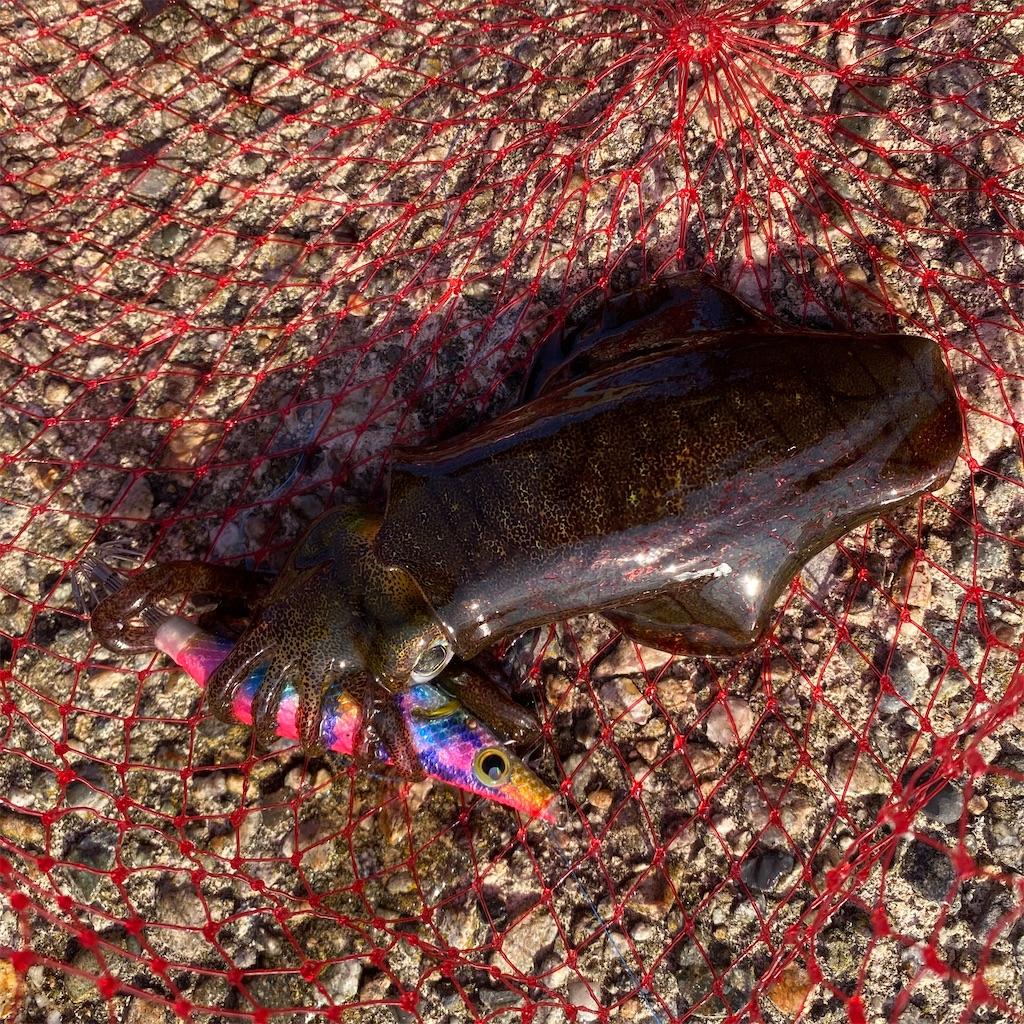 f:id:yu-kin-fishing:20201014183512j:image
