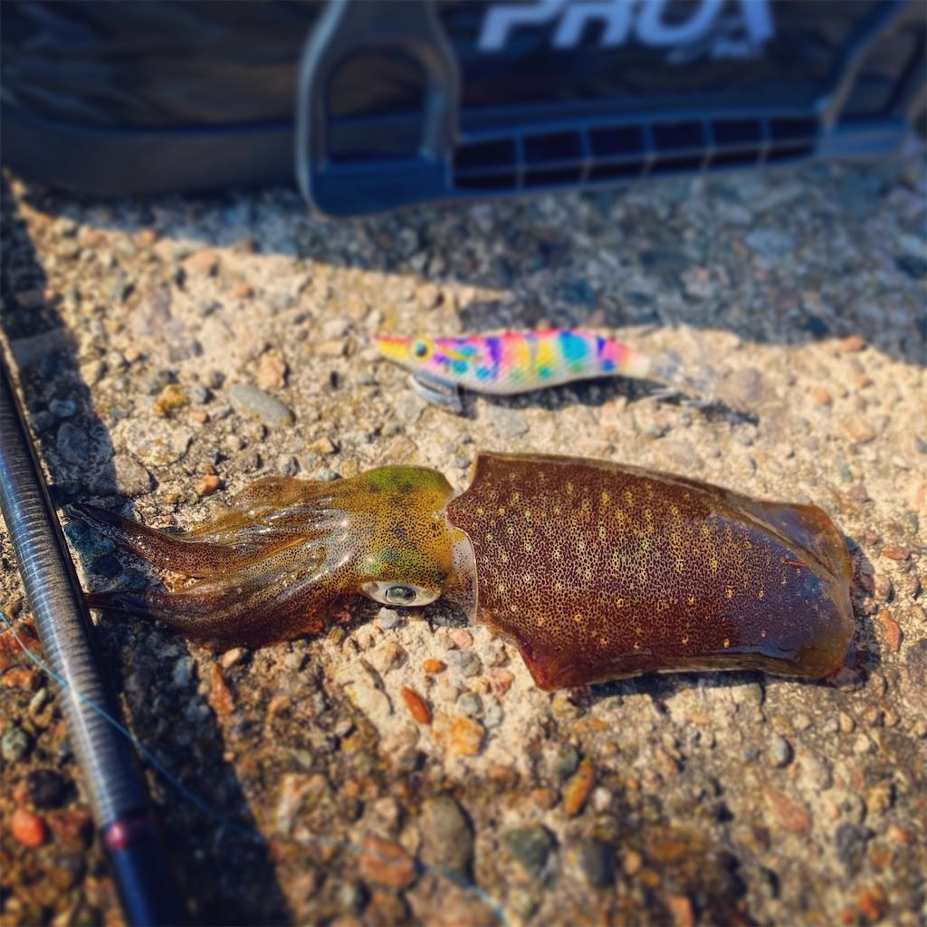 f:id:yu-kin-fishing:20201014183541j:image