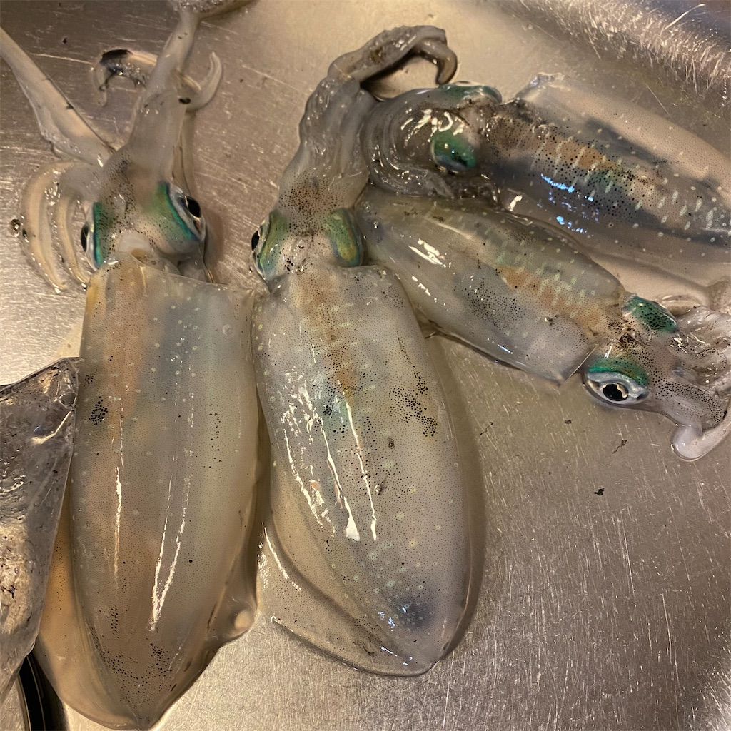 f:id:yu-kin-fishing:20201025200416j:image