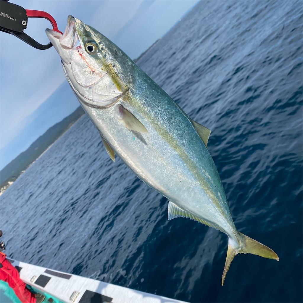 f:id:yu-kin-fishing:20201101180410j:image