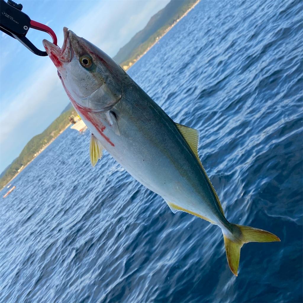 f:id:yu-kin-fishing:20201101180415j:image