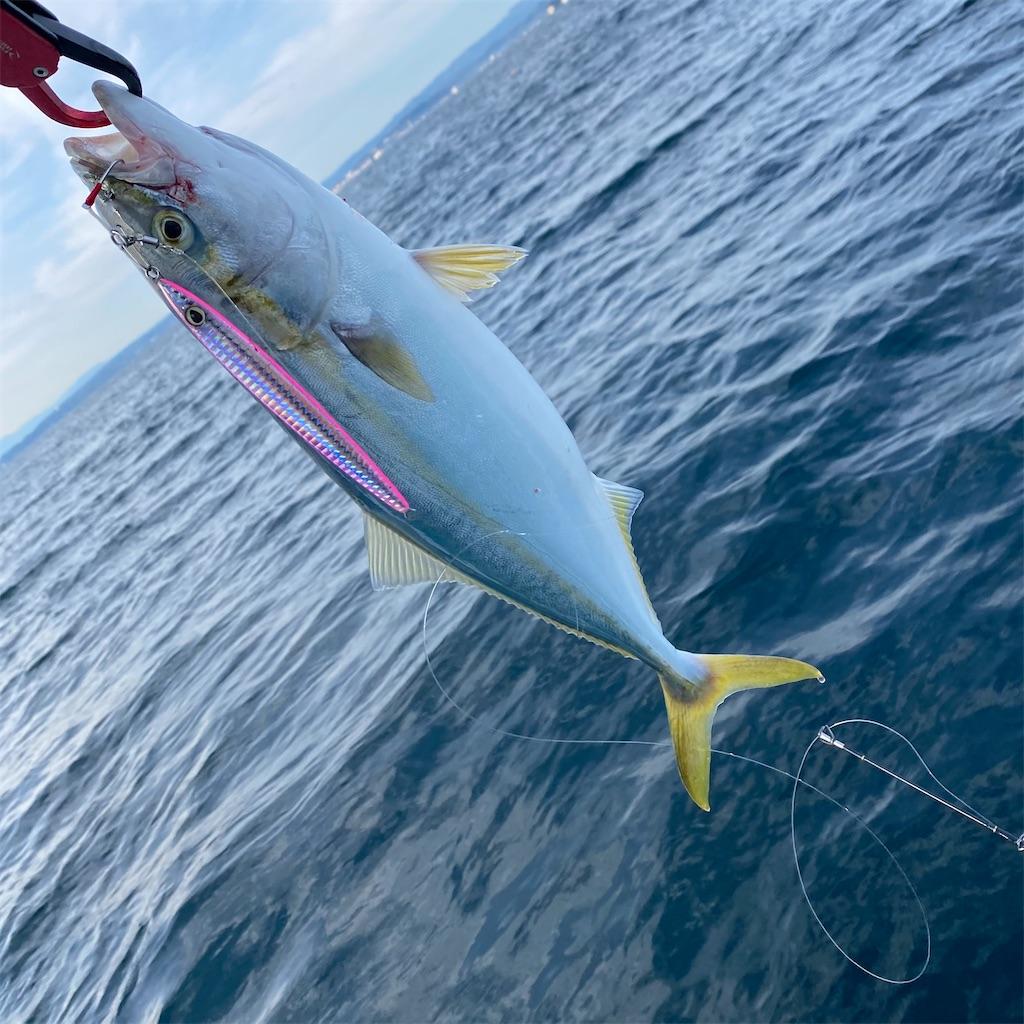 f:id:yu-kin-fishing:20201101180418j:image