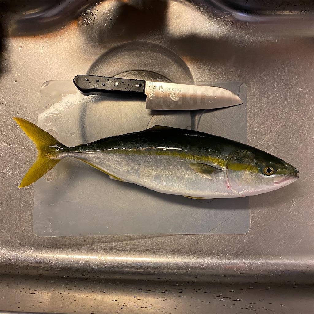 f:id:yu-kin-fishing:20201101181552j:image