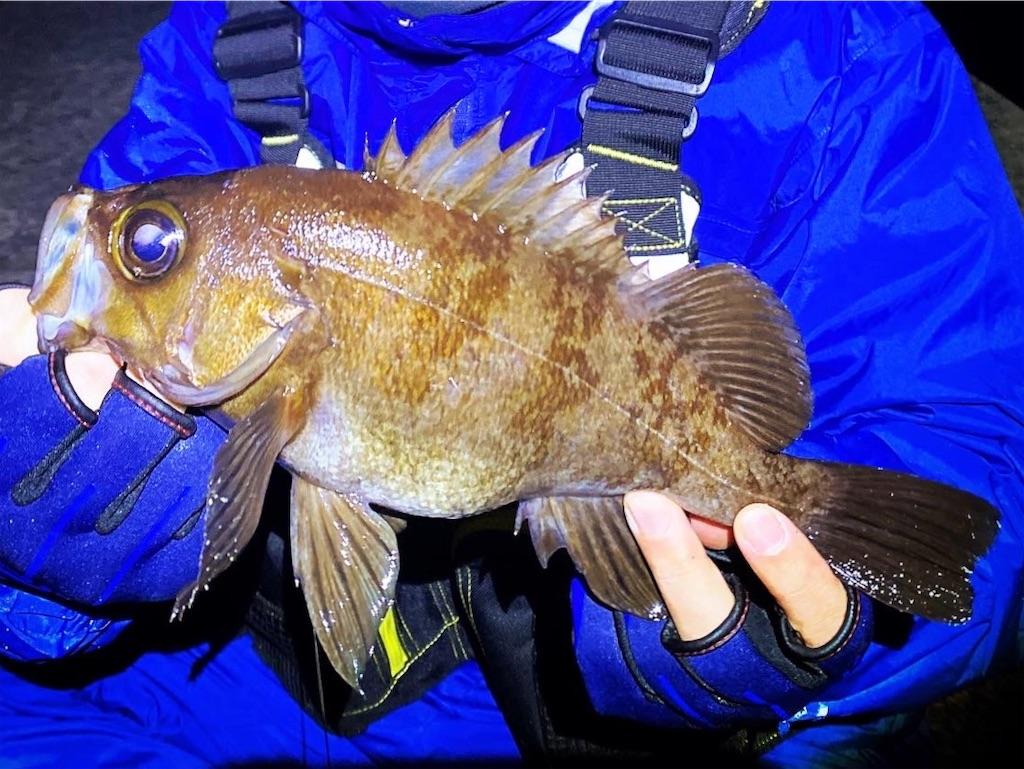 f:id:yu-kin-fishing:20201103193404j:image