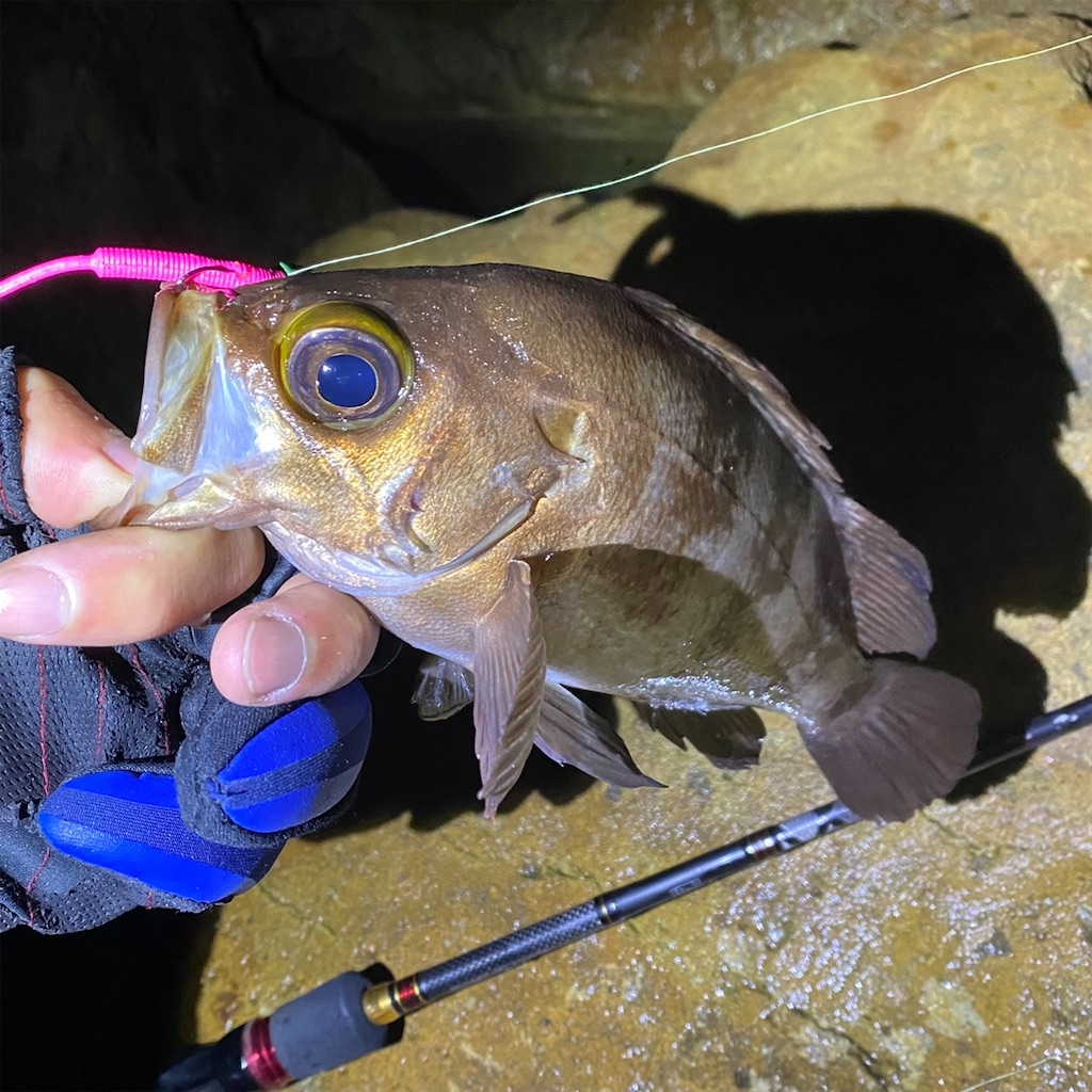 f:id:yu-kin-fishing:20201109083935j:image