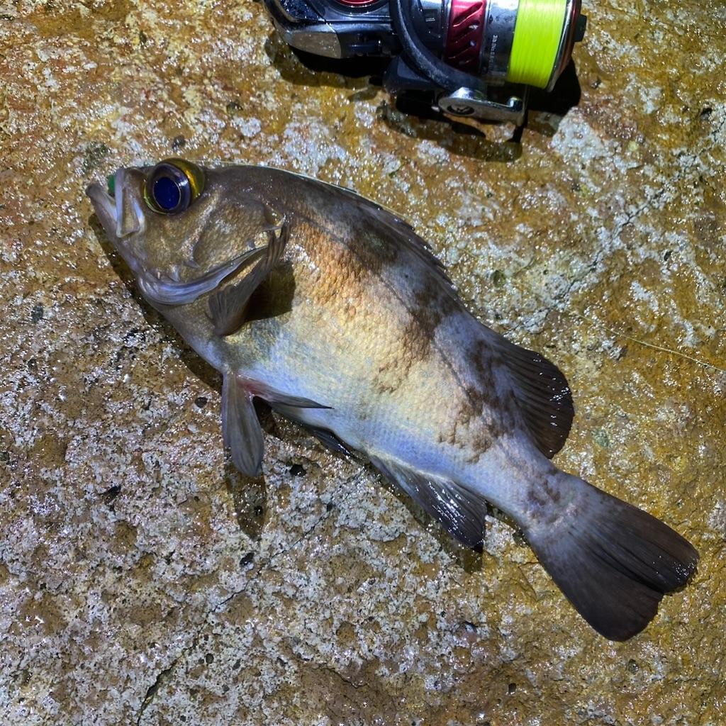 f:id:yu-kin-fishing:20201109084622j:image