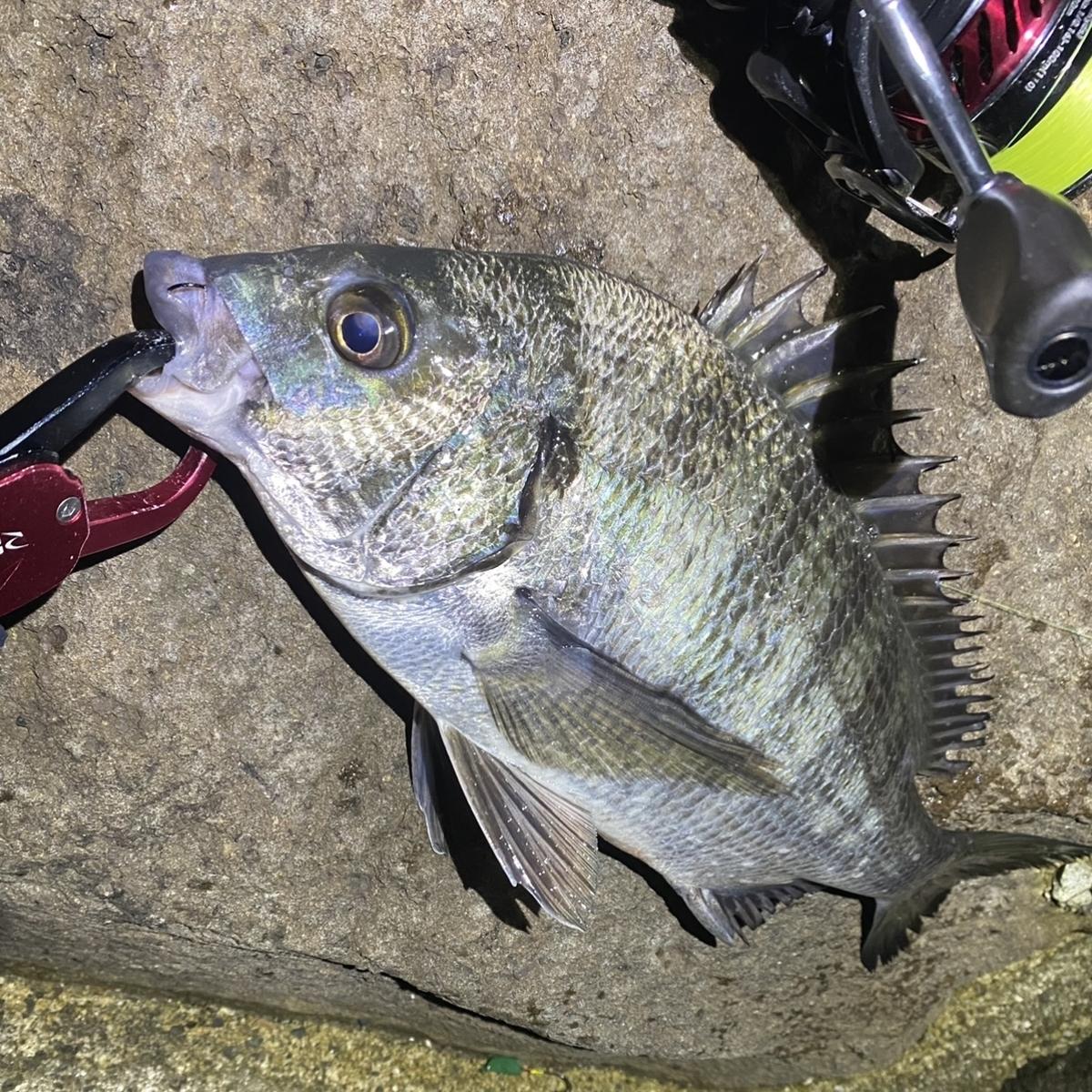 f:id:yu-kin-fishing:20201111085035j:plain