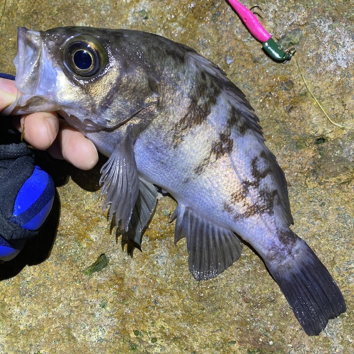 f:id:yu-kin-fishing:20201111172728j:plain
