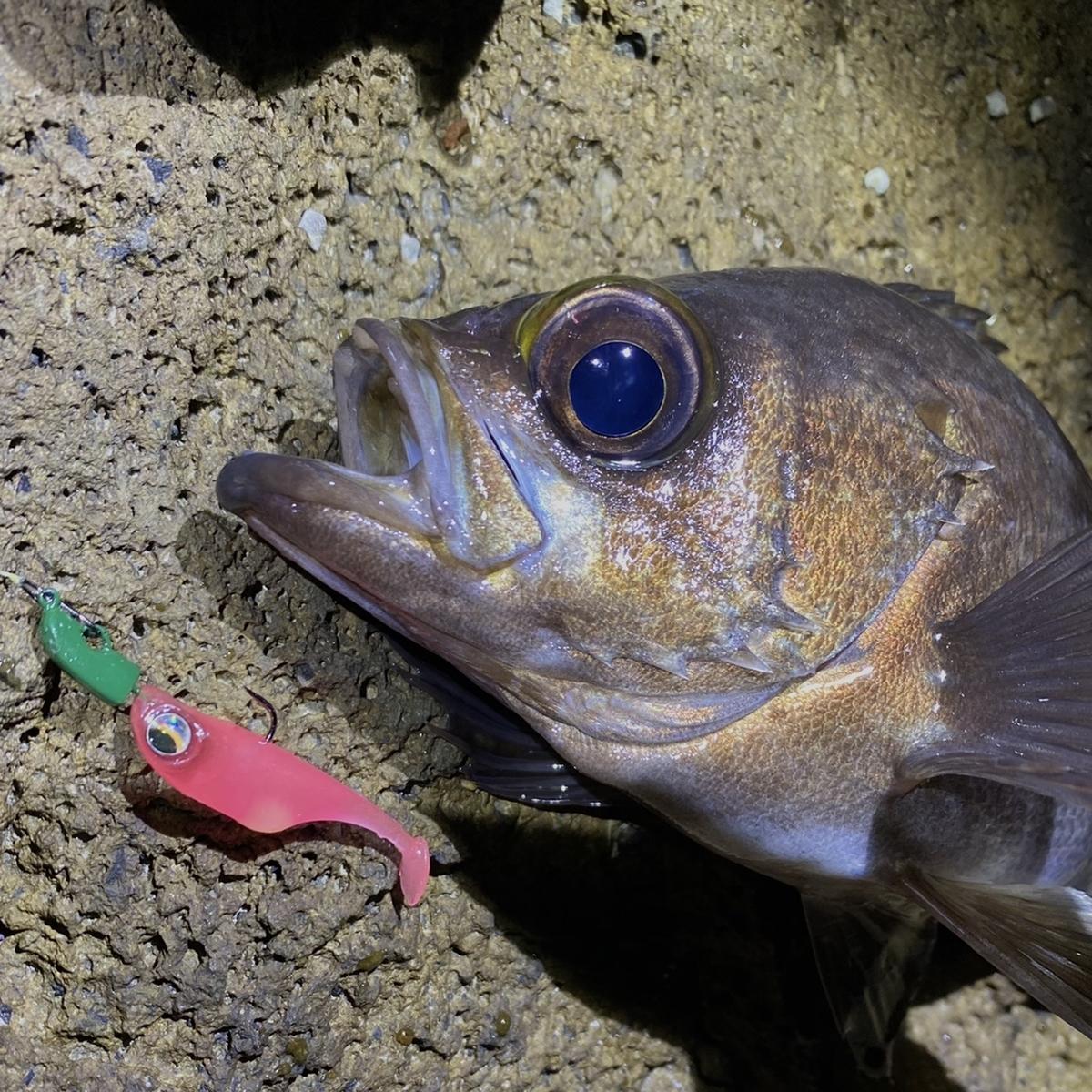 f:id:yu-kin-fishing:20201113101611j:plain