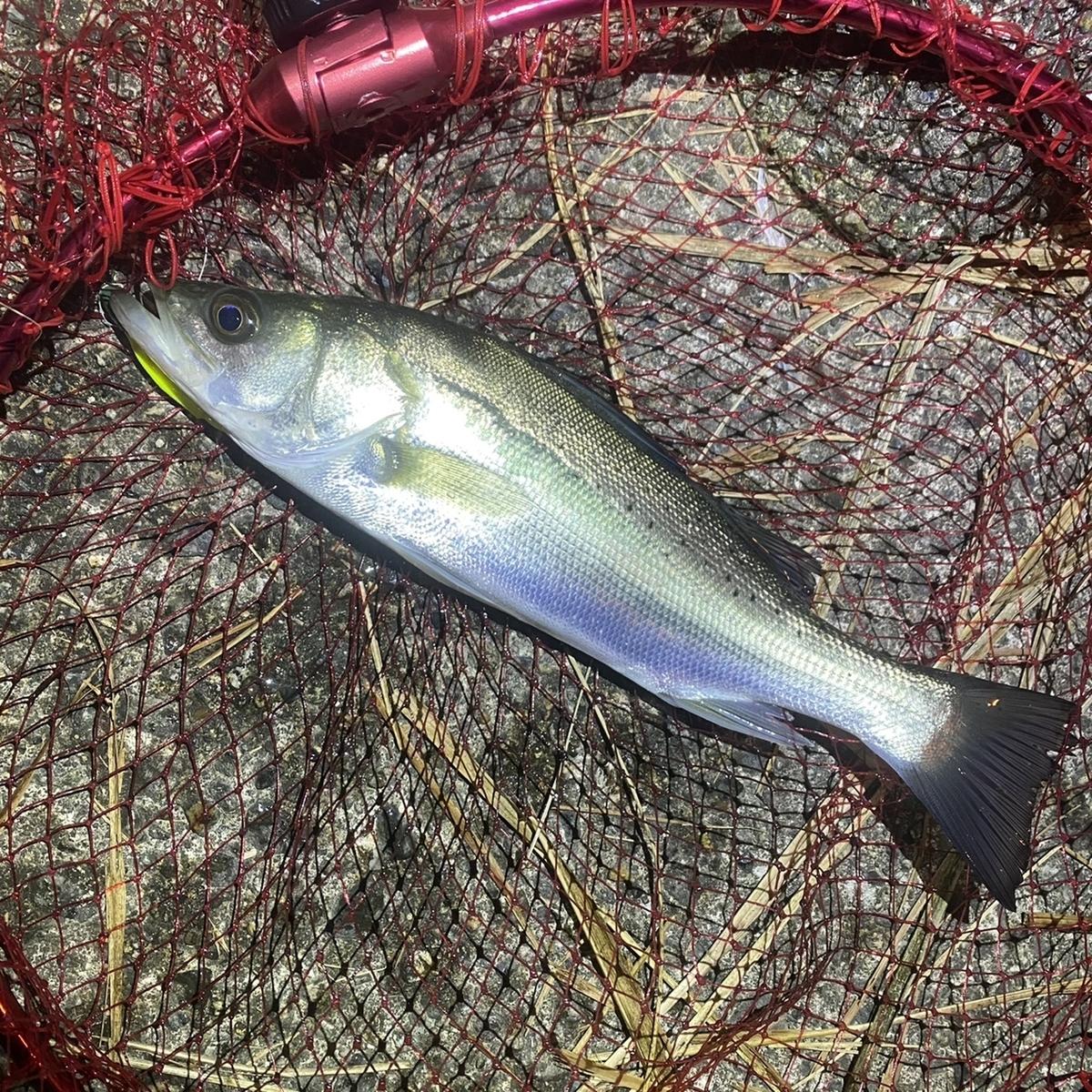f:id:yu-kin-fishing:20201118135212j:plain