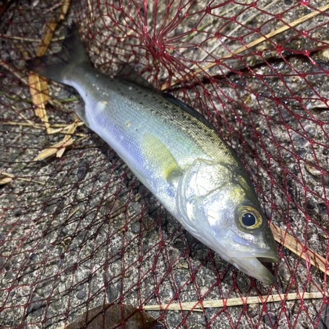 f:id:yu-kin-fishing:20201118135249j:plain