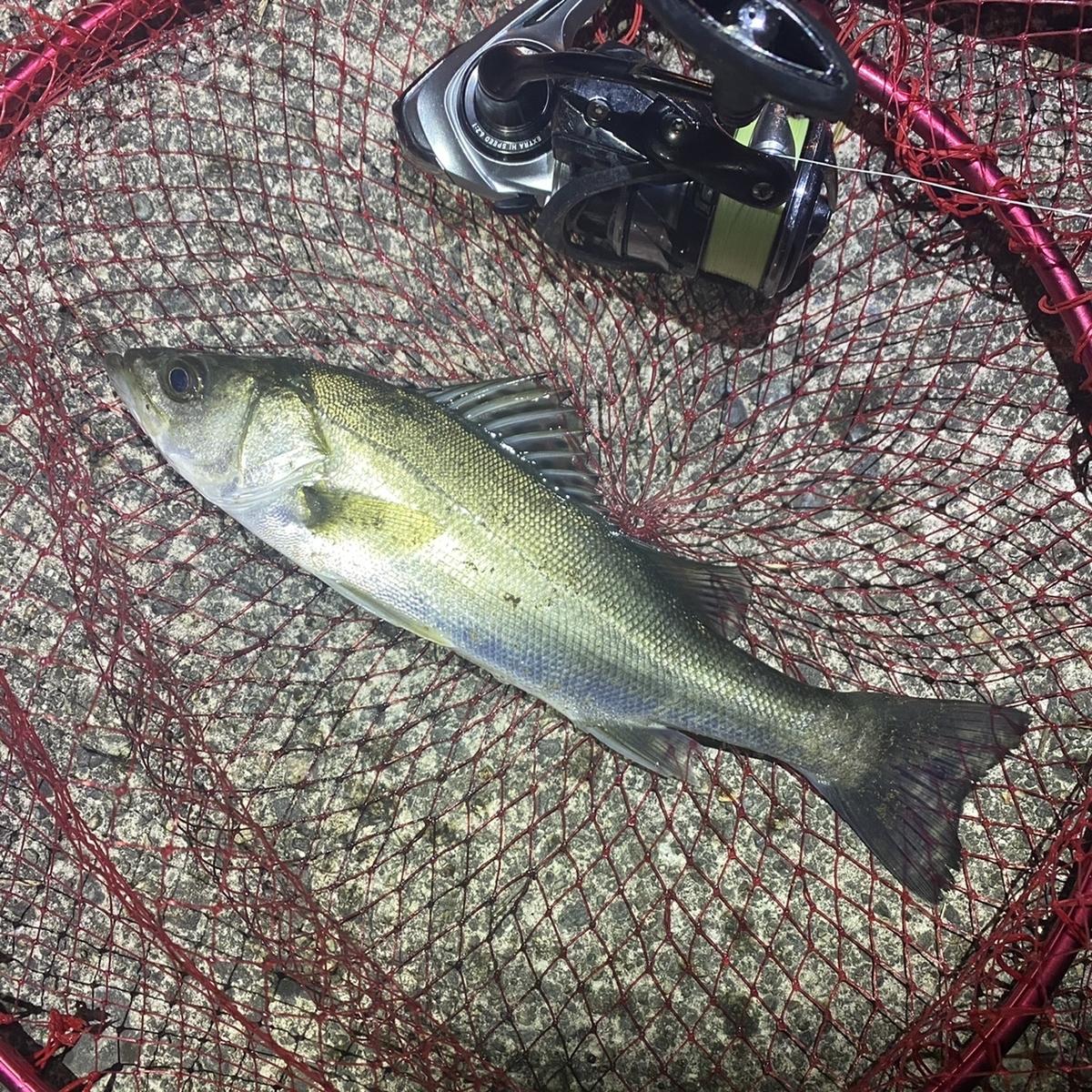 f:id:yu-kin-fishing:20201118135306j:plain