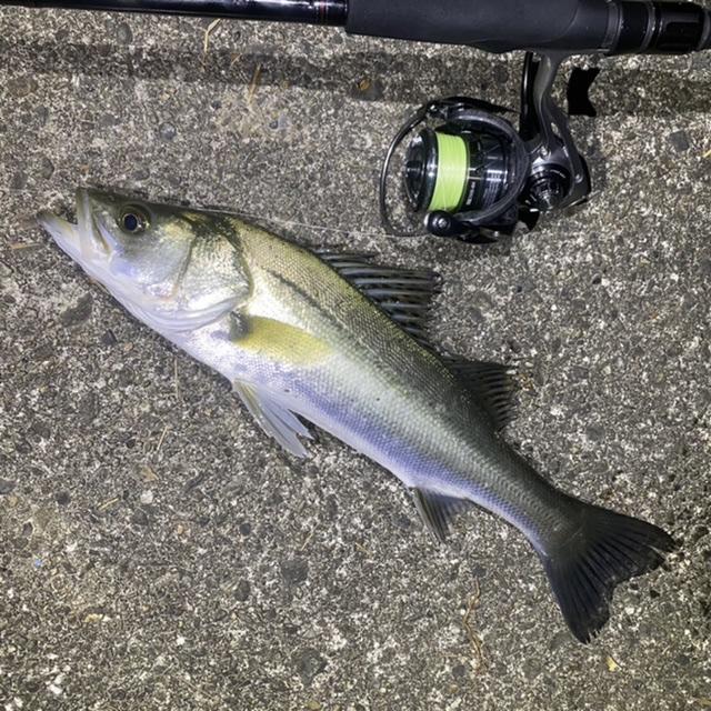 f:id:yu-kin-fishing:20201118135330j:plain