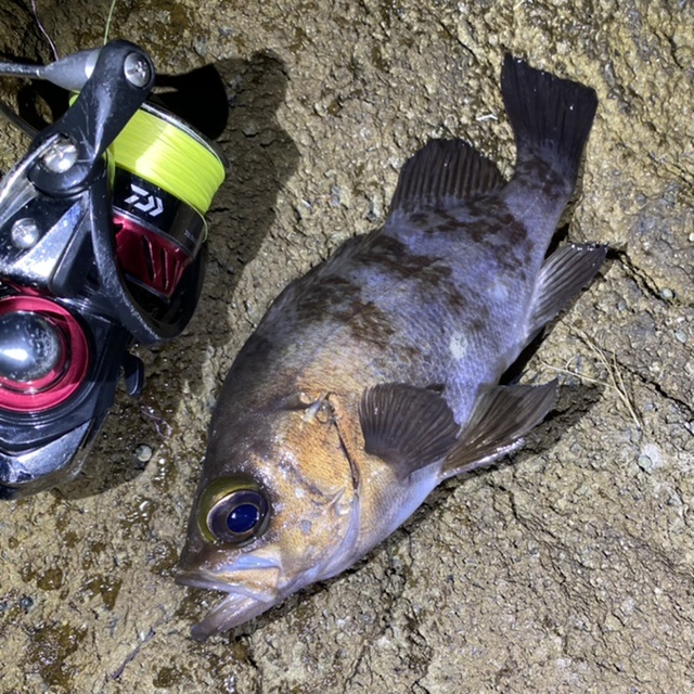 f:id:yu-kin-fishing:20201126184052j:plain