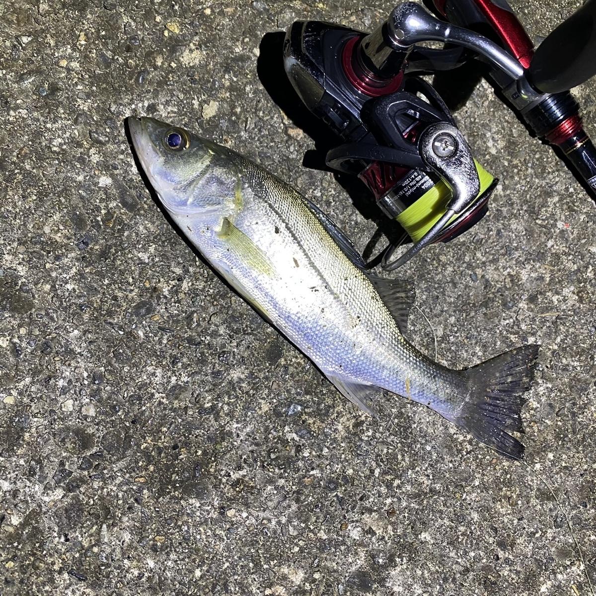 f:id:yu-kin-fishing:20201129101113j:plain