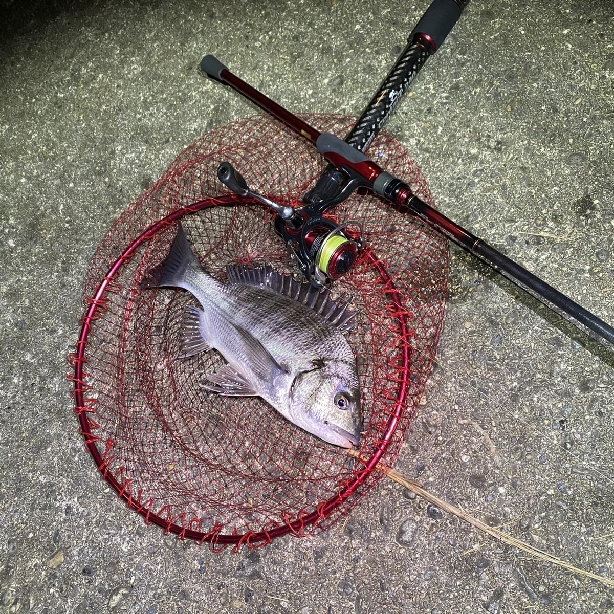 f:id:yu-kin-fishing:20201129101133j:plain
