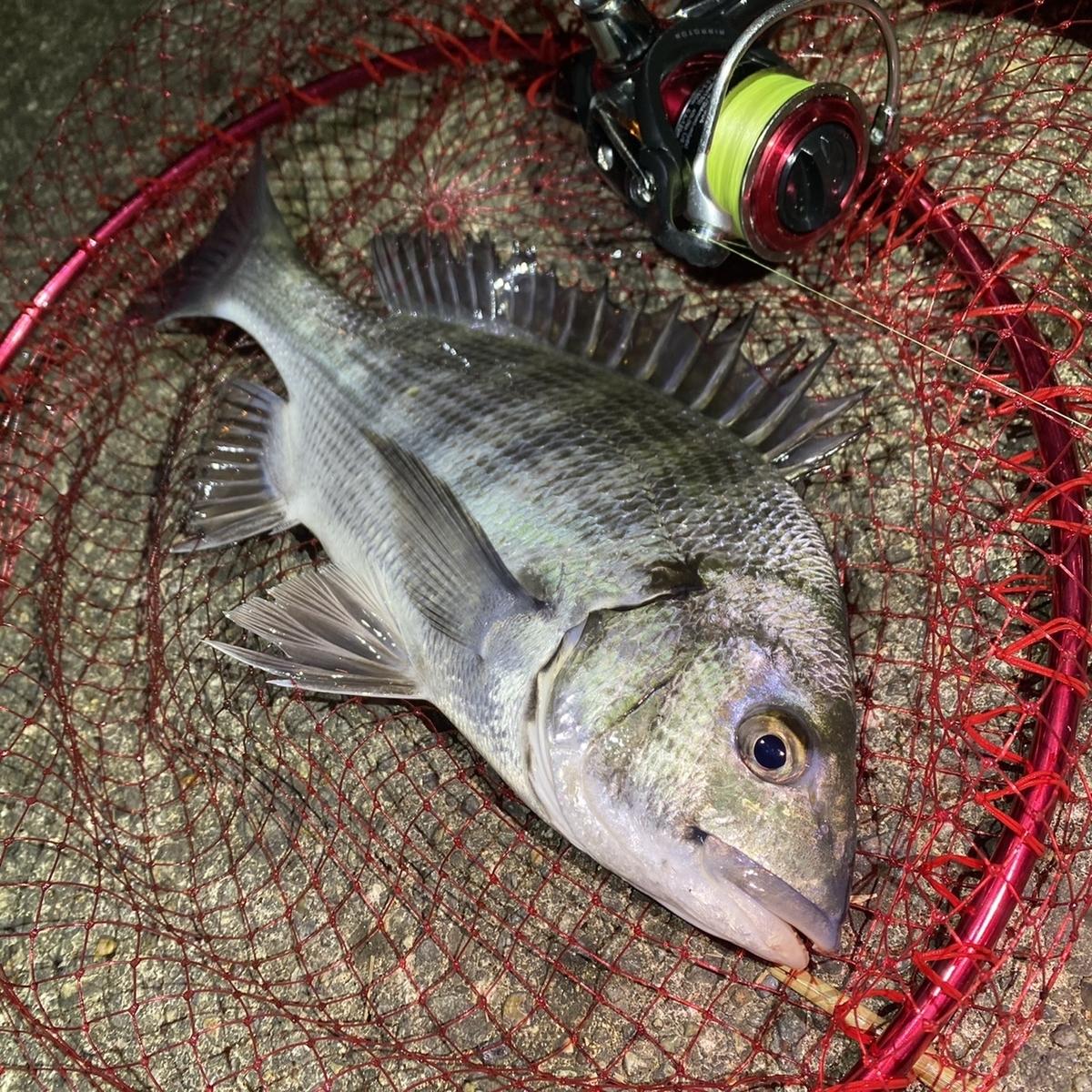 f:id:yu-kin-fishing:20201129101139j:plain