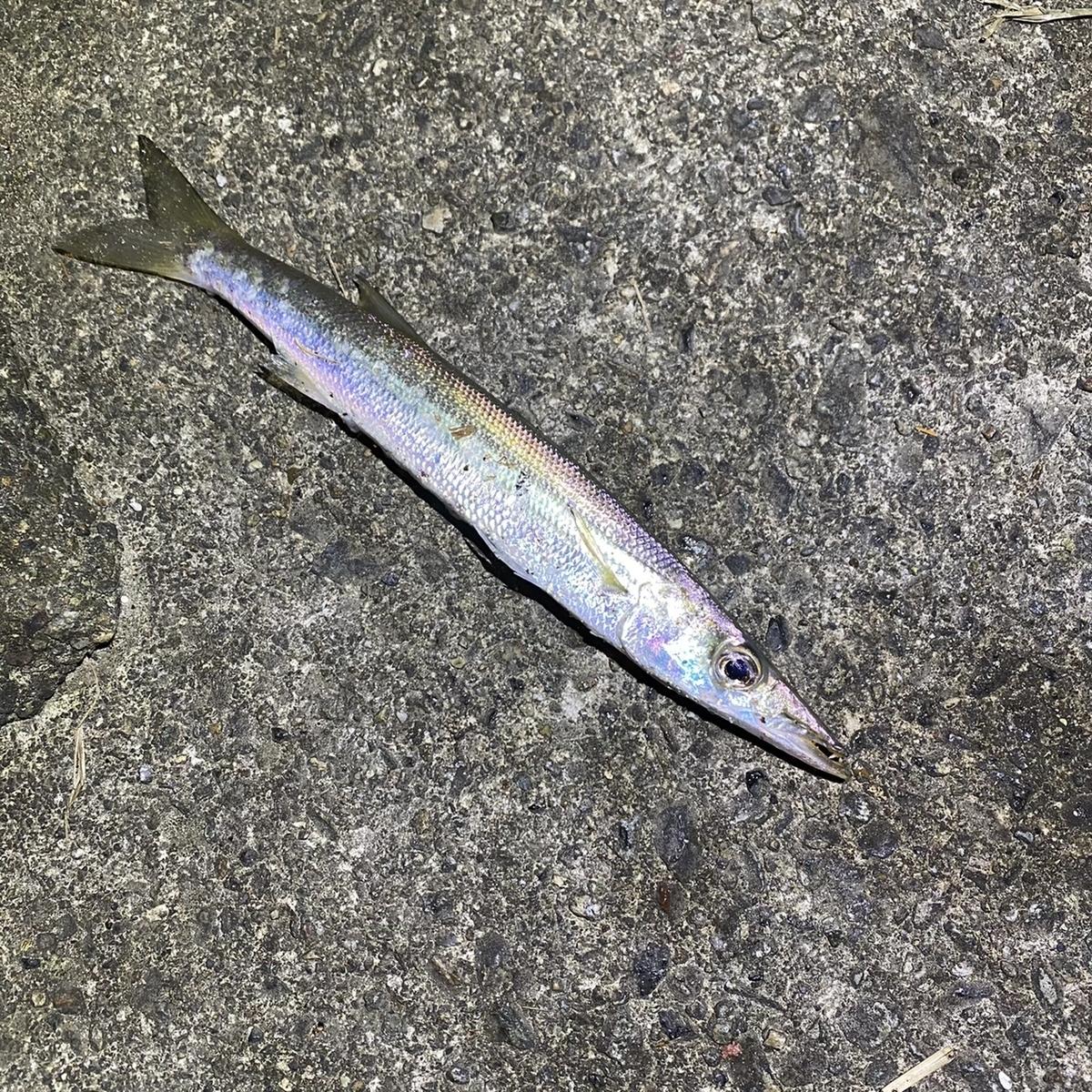 f:id:yu-kin-fishing:20201129101146j:plain