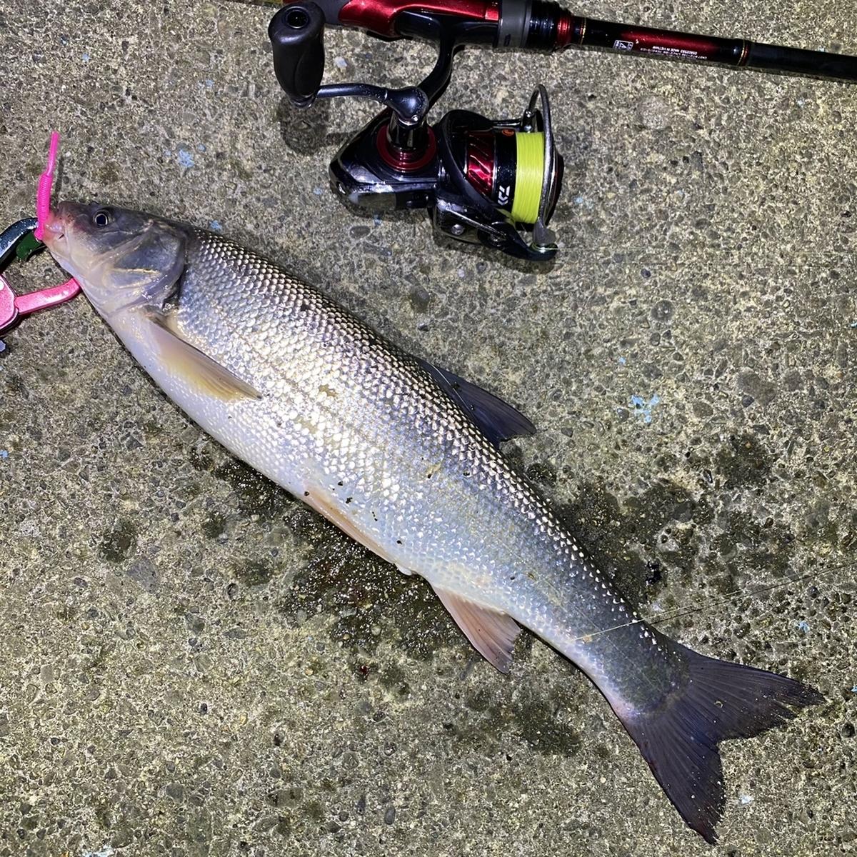 f:id:yu-kin-fishing:20201201225522j:plain