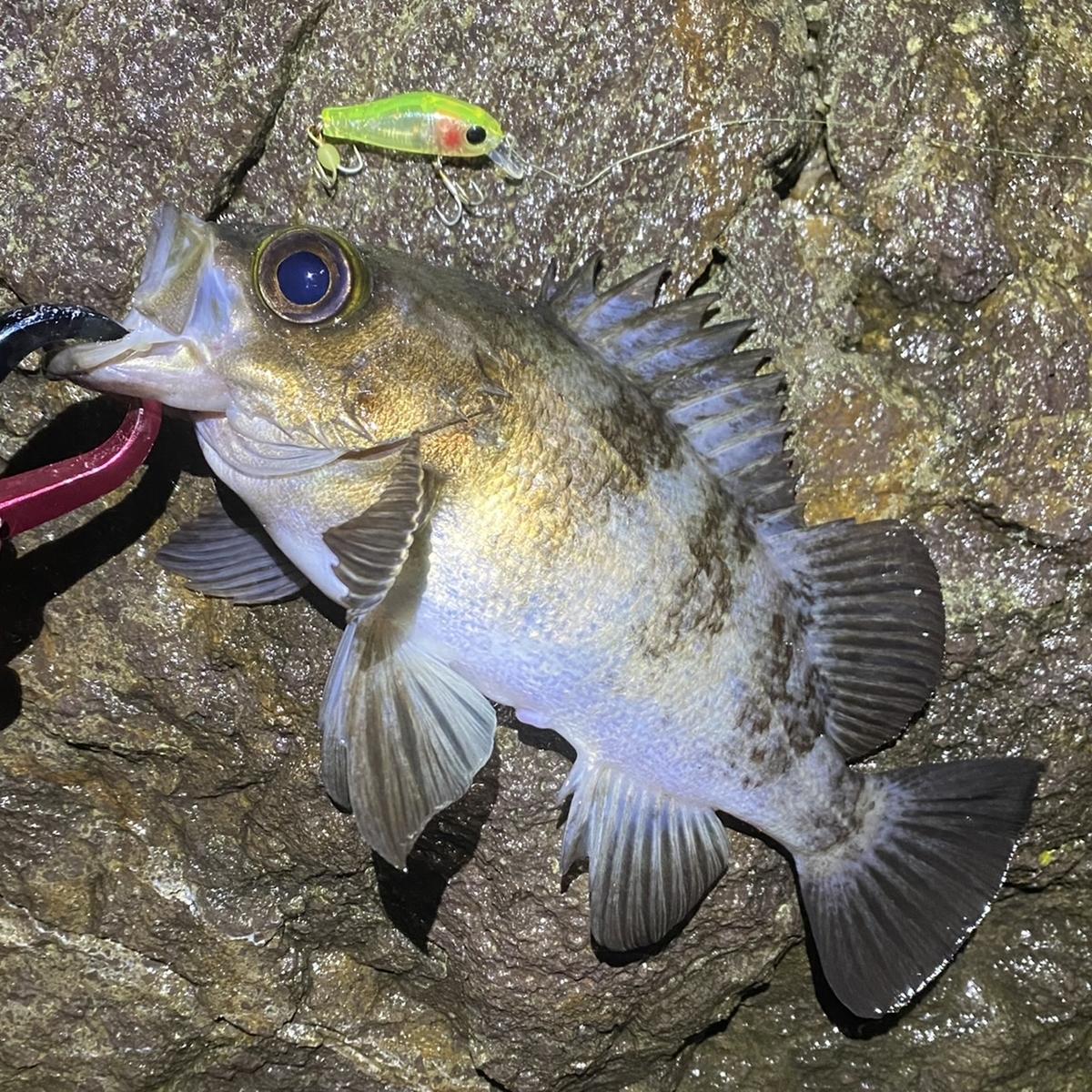 f:id:yu-kin-fishing:20201208151836j:plain